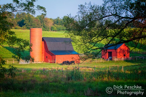 Barn with out buildings and cattle