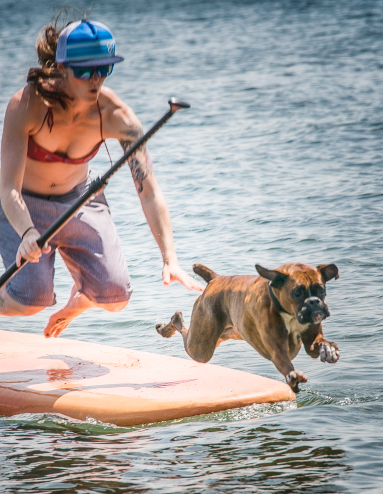 Dog jumps off the wakeboard
