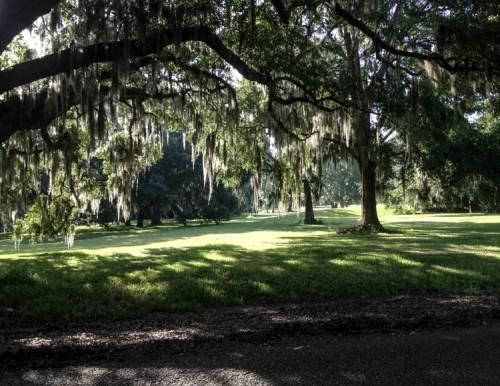Moss Oak Trees