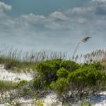 Grassy Sand Dune